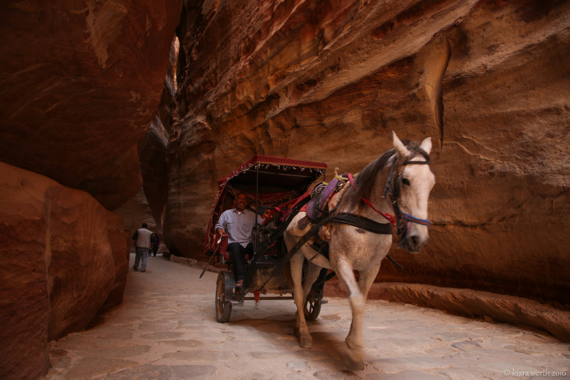 A horse pulls a carriage along the Petra Roman Road, weaving its way between the turns in the rock.