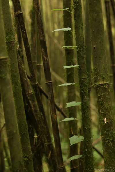 A staircase of leaves winds it way up the bamboo