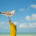 A seagull poses on a wooden post off the shore of Holbox